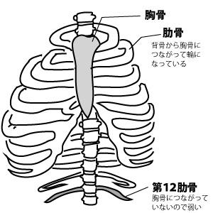 マッサージでよく折れる骨_第12肋骨
